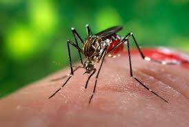 Dengue TESTS : What to do and when ?